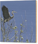 Blue Heron 35 Wood Print by Roger Snyder