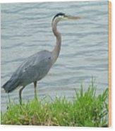 Blue Heron By The Lake Wood Print