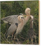 Blue Heron Family Wood Print