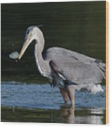 Blue Heron - Fish By The Tail Wood Print