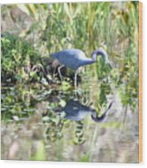 Blue Heron Fishing In A Pond In Bright Daylight Wood Print