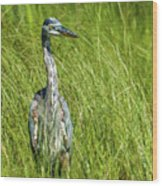 Blue Heron In A Marsh Wood Print