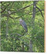 Blue Heron In Green Tree Wood Print