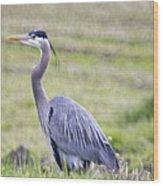 Blue Heron In Northern Wa  Wood Print