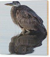 Blue Heron In Reflection, St. Marks Wildlife Refuge, Florida Wood Print