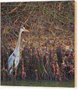 Blue Heron In The Cypress Knees Wood Print