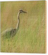 Blue Heron In The Grass. Wood Print