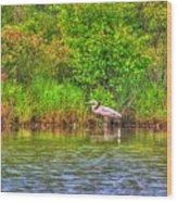 Blue Heron-in The Swamp-20 Wood Print