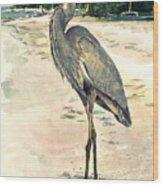 Blue Heron On Shell Beach Wood Print