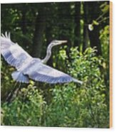 Blue Heron On The Move Wood Print
