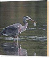 Blue Heron Snack Wood Print