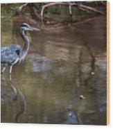 Blue Heron Stalking  Wood Print