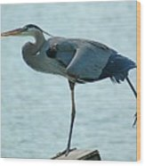 Blue Heron Stretching Wood Print