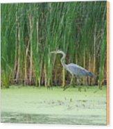 Blue Heron Taking A Walk Wood Print
