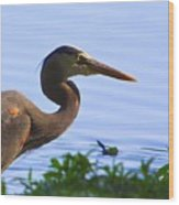 Blue Heron-the Profile Wood Print
