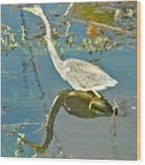 Blue Heron Walking Wood Print