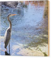 Blue Heron With Shadow Wood Print