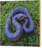 Blue Hognose Wood Print