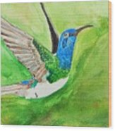 Blue Humming Bird Wood Print