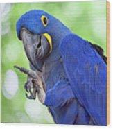 Blue Hyacinth Macaw Wood Print