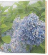 Blue Hydrangea At Rainy Garden In June, Japan Wood Print