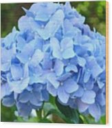 Blue Hydrangea Floral Art Print Hydrangeas Flowers Baslee Troutman Wood Print