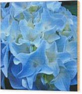 Blue Hydrangea Floral Flowers Art Prints Baslee Troutman Wood Print