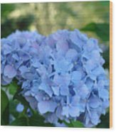 Blue Hydrangea Flower Art Prints Baslee Troutman Wood Print