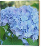 Blue Hydrangea Flowers Art Botanical Nature Garden Prints Wood Print