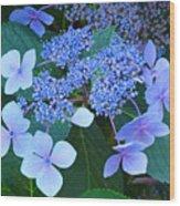Blue Hydrangea Flowers Floral Art Baslee Troutman Wood Print
