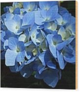 Blue Hydrangea II Wood Print
