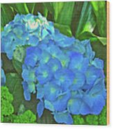Blue Hydrangea In Bellingrath Gardens In Mobile, Alabama2 Wood Print