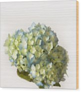 Blue Hydrangea Spray Wood Print