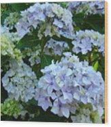 Blue Hydrangeas Art Prints Hydrangea Flowers Giclee Baslee Troutman Wood Print