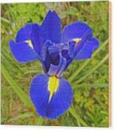 Blue Iris Beauty Wood Print