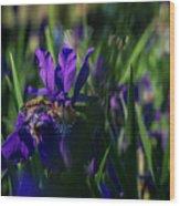 Blue Iris Field  Wood Print