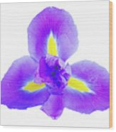 Blue Iris Flower Wood Print