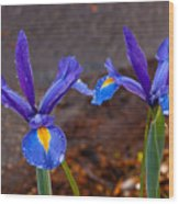 Blue Iris Germanica Wood Print