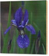 Blue Iris Petal Wood Print