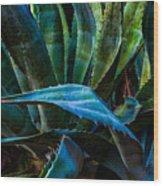Blue Jay Agave Wood Print