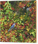 Blue Jay And Berries Wood Print