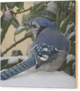 Blue Jay Beauty Wood Print