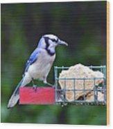 Blue Jay - Cyanocitta Cristata  Wood Print