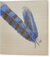 Blue Jay Feathers Wood Print