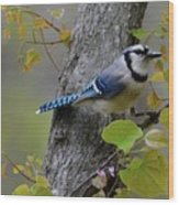 Blue Jay In Red Bud Wood Print