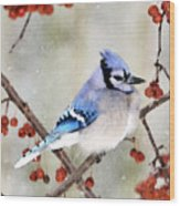 Blue Jay In Snowfall 3 Wood Print