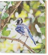 Blue Jay Wood Print
