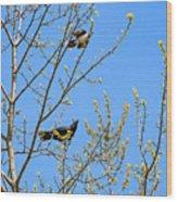 Blue Jay Mobbing A Crow Wood Print