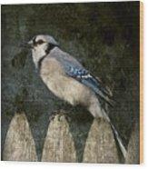 Blue Jay On The Fence Wood Print