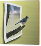 Blue Jay Perched Wood Print